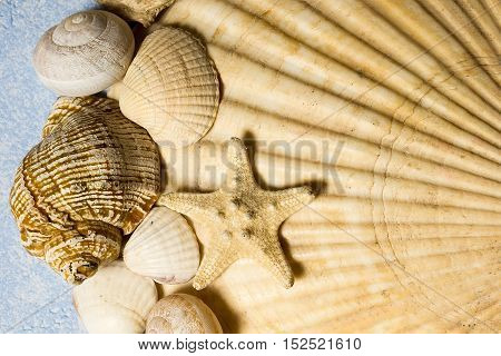 composition of different textured sea shells and starfish on a textured blue background