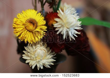 lovely little bouquet of dried colorful flowers in a vase modest