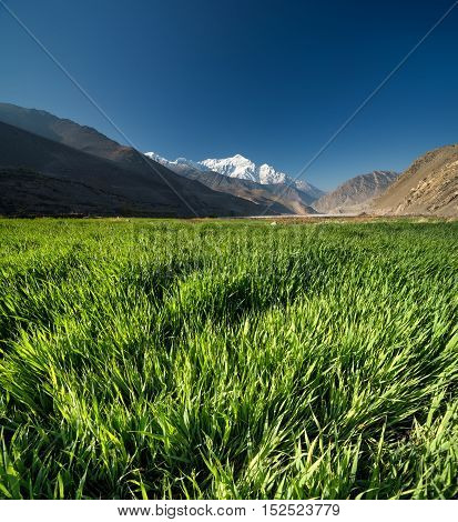 Field in the mountain valley. Natural composition in the summer time