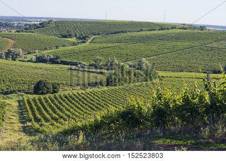 Chianti vineyard landscape in Tuscany, Italy, farm
