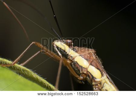 Insect Close up with Green Leaf Isolated