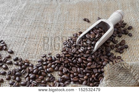 Coffee beans spill out of a wooden scoop on the background of rough burlap