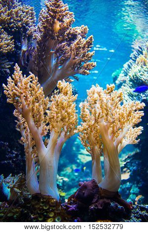 coral as a part of a coral reef
