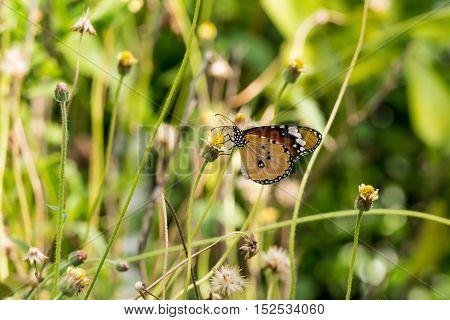 It is butterfly on flower in the garden