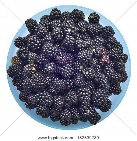 Ripe blackberries in bowl (hybrid berry of raspberry and wild bramble).