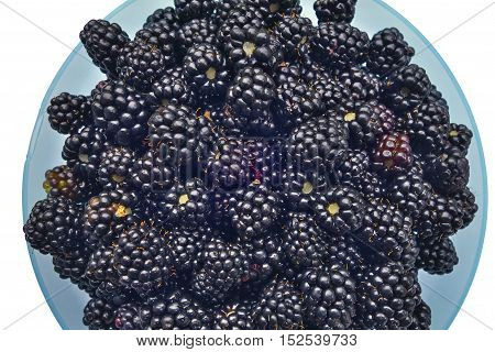 Ripe blackberries in blue bowl (hybrid berry of raspberry and wild bramble).
