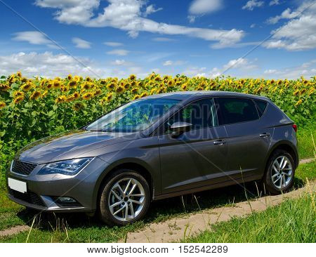 car on a field of sunflowers