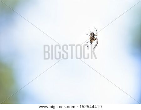 Spider in air on a invisible net.