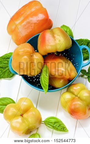 Heap of Fresh Ripe Yellow and Orange Bell Peppers with Green Basil Leafs in Blue Colander closeup on White Plank background