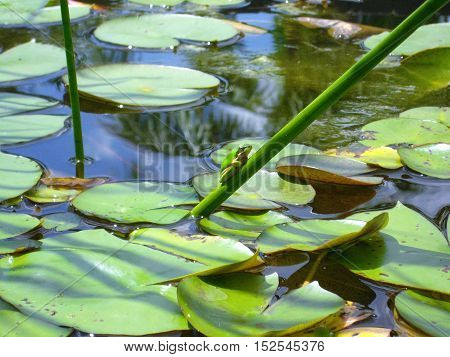 Frog green water lives branches sunbathing stay