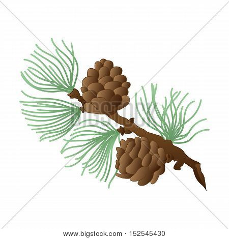 European Larch. Hand Drawn Cones Needles and Bough of Larch. Vector Illustration.