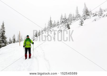 Winter trek in white woods. Man hiking trekking in winter white forest. Travel recreation fitness and healthy lifestyle in beautiful snowy nature. Adventure in inspirational white winter landscape.