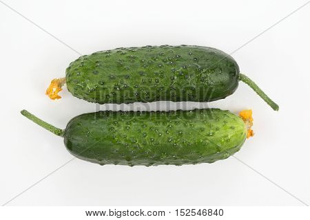 the two green cucumber on white background