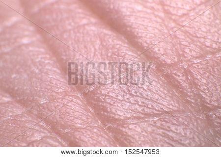 Close up of Human Skin (Under Foot)