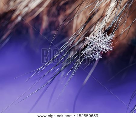 brilliant cold beautiful clear snowflake lies on the hairs on the festive background