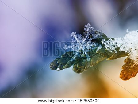 festive elegant Christmas background with beautiful snowflakes on a branch