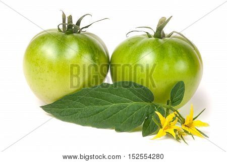 two green unripe tomato with a flower and leaf isolated on white background.