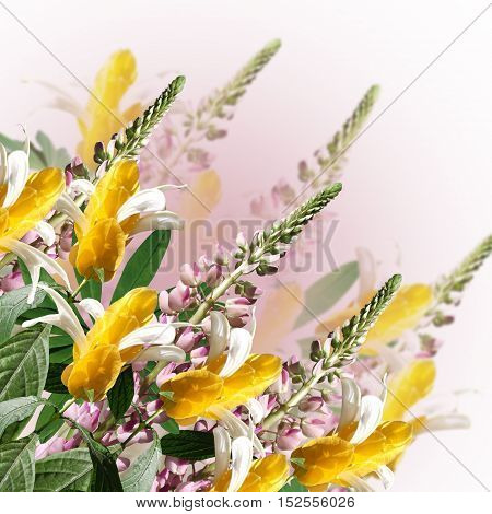 Beautiful floral background with pink lupine and pachystachys