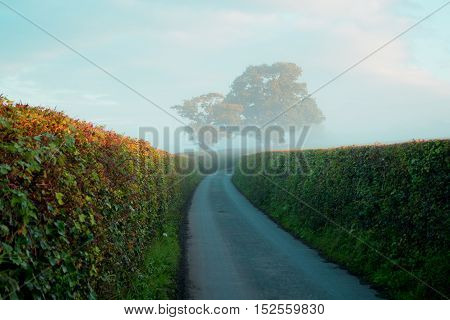 Oak and beech hedges around country road on a misty morning in Devon