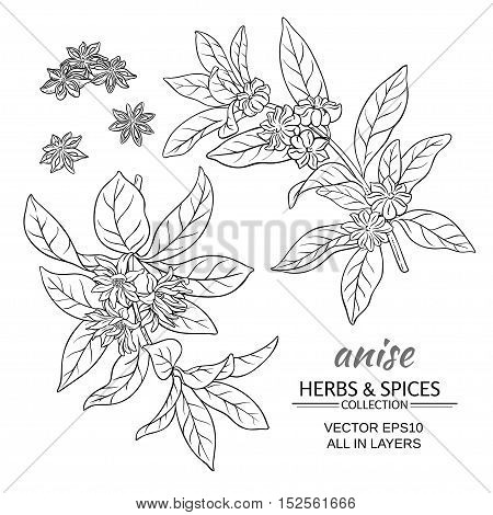 anise branches vector set on white background