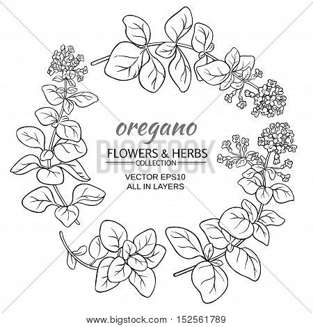 oregano herb vector set on white background