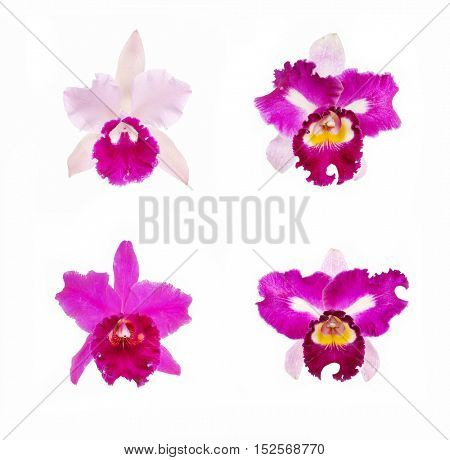 four colorful Orchids