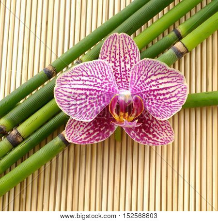 Pink orchid with bamboo grove on mat