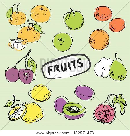 Set of hand drawn fruits. Doodle vector illustration