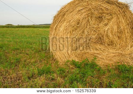 Haystack in a green field in late summer after harvest