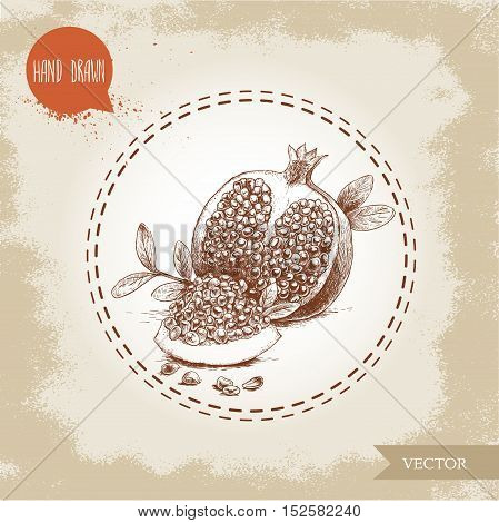 Hand drawn organic pomegranates with seeds and leafs. Sketch style vector illustration.