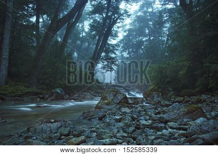 Magical scenery stream crossing the dense forest