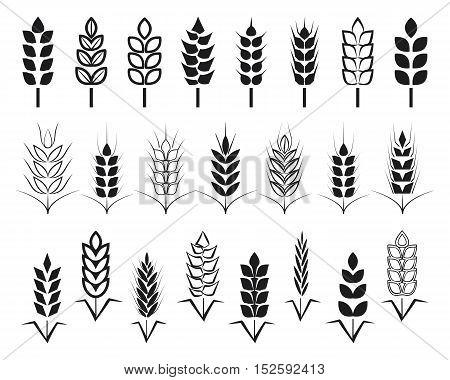 Symbols. for logo design Wheat. Agriculture, corn, barley, stalks, organic plants, bread, food, natural harvest, vector illustration on white background isolated.