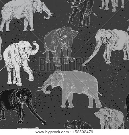 Seamless Pattern With Wild Elephant