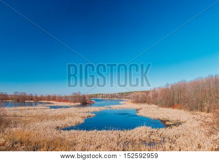 Small Lake In Spring Season In Belarus. Sunny Spring Day. Belarusian Beautiful Landscape. Yellow Dry Grass Under Blue Sunny Sky.