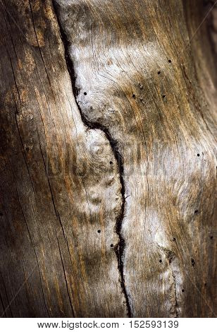 abstract background or texture vertical crack on an old twig