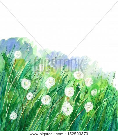 illustration dandelion flower.Summer meadow grass.Plant background.Watercolor hand drawn illustration.