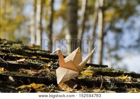 Cream colored crane in a birch wood