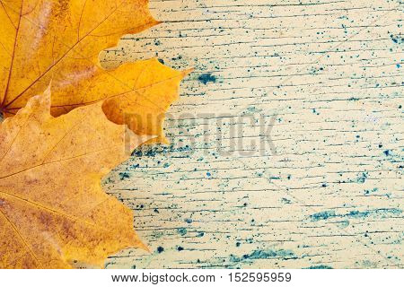 Yellow autumn leaves on wood background. Nature