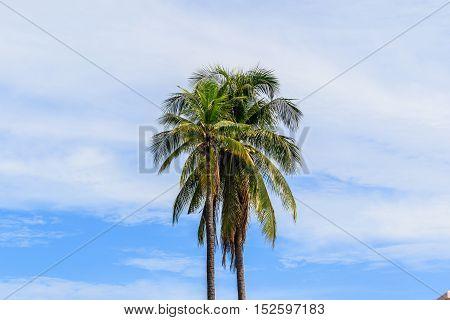 Sweet Coconut tree in Blue sky background