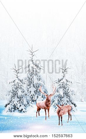 forest in the frost. Winter landscape. Snow covered trees. deer