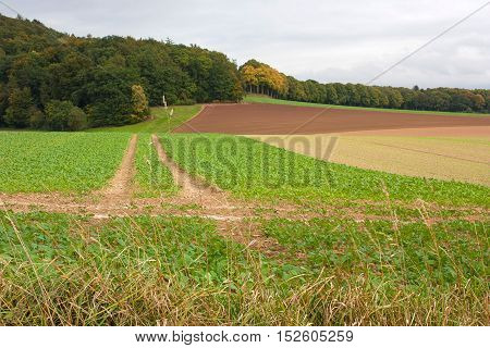 An agricultural landscape with a way through the field to the forest. Location Bad Pyrmont in Germany.