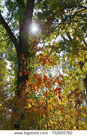 Colored leaves in the rays of the autumn sun