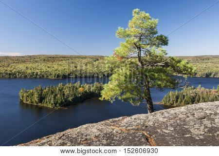 Lone pine tree growing on high rock cliff facing scenic view of blue lake. Algonquin Provincial Park, Canada.
