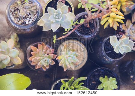 Succulents In Used Jars And Tins, Eco And Reuse Concept
