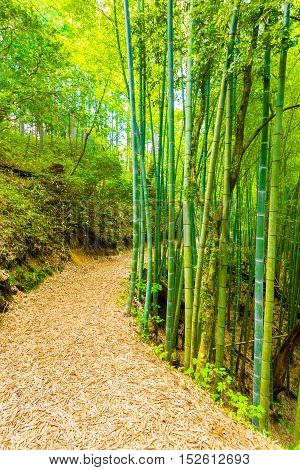 Bamboo Forest Path To Grounds Tsumago Castle V