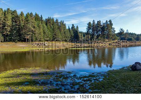 Landscape of Green forest of Shiroka polyana Reservoir, Pazardzhik Region, Bulgaria