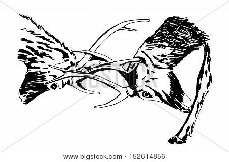 Hand drawn sketch of deers fighting, using black ink pen, isolated on white background.