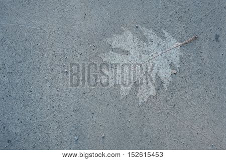 Trace of an oak leaf on the ground