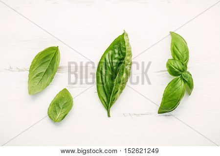 Fresh Sweet Green Basil Leaves On  White Shabby Wooden Background. Sweet Basil Leaves With Flat Lay
