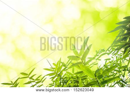 Green bamboo leaves or with background .Green Energy.